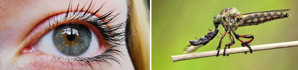 Exemplo de fotos tiradas com Filtro Close UP