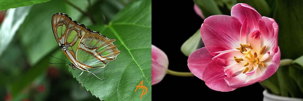 Exemplo de macrofotografia com filtro Close UP