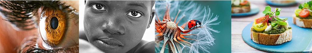 Lente Macro - Exemplos de fotos